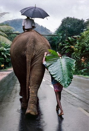A young farmer walks next to an elephant, Kandy, Sri Lanka by Steve McCurry contemporary artwork