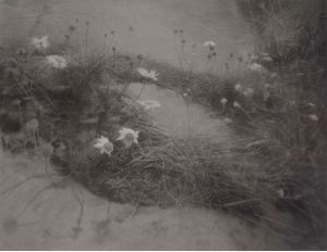Small Flowers Below Puddle by Gunnel Wåhlstrand contemporary artwork