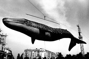 Whale by Daido Moriyama contemporary artwork