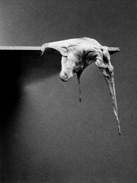 Fotorzeźby (Photosculptures) by Alina Szapocznikow contemporary artwork photography