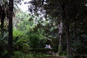 Lovers - Botanical Garden of Hamma, Algiers by Tomoko Yoneda contemporary artwork