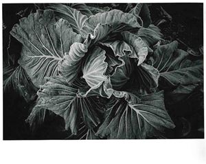 Cabbage by Daido Moriyama contemporary artwork