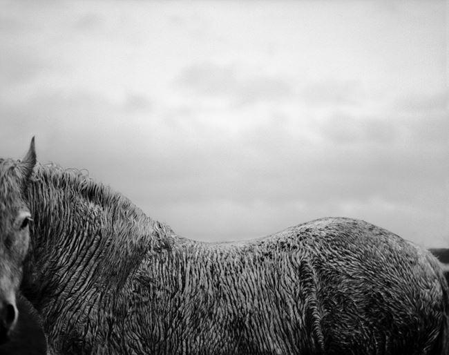 Ellezelles by Stephan Vanfleteren contemporary artwork