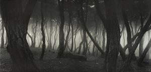 Sonamu Pine Tree (special edition) by Bae Bien-U contemporary artwork