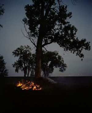 Fire and Tree, Omaha, NE by Gregory Halpern contemporary artwork