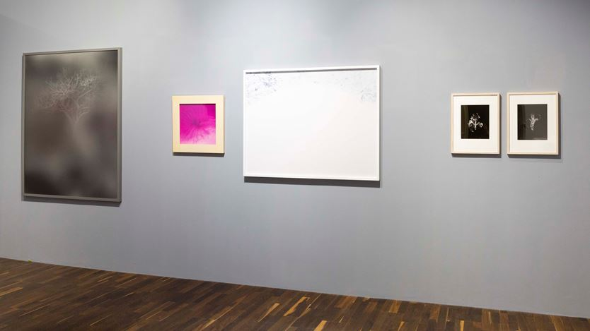 Exhibition view: Group Exhibition, Abstraction, Christophe Guye Galerie, Zurich (4 September 2020–30 January 2021). Courtesy Galerie Christophe Guye.