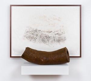 Black wattle by John Wolseley contemporary artwork