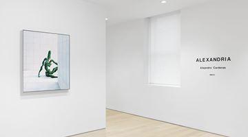 Contemporary art exhibition, Alejandro Cardenas, ALEXANDRIA at Almine Rech, New York