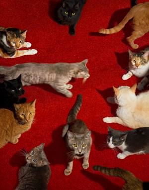Cats by Alex Prager contemporary artwork