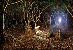 Reborn! Nature's Transfusion by David LaChapelle contemporary artwork