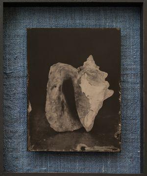 Mussel by Steffen Diemer contemporary artwork