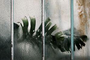 Araceae Monstera deliciosa by Samuel Zeller contemporary artwork