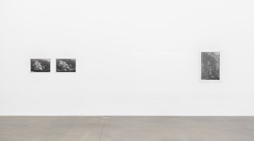 Contemporary art exhibition, Zoe Leonard, Aerials at Hauser & Wirth, London