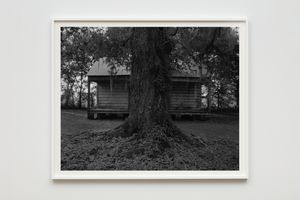 Tree and Cabin by Dawoud Bey contemporary artwork photography