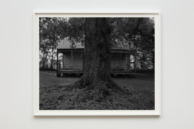 Tree and Cabin by Dawoud Bey contemporary artwork