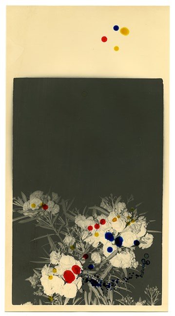Canary Yellow, Vermilion and Cobalt on Flowers by Bruno V. Roels contemporary artwork