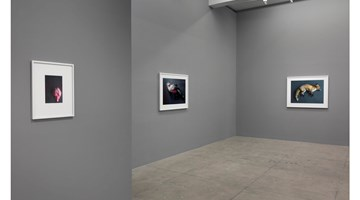 Contemporary art exhibition, Thomas Struth, New Works at Marian Goodman Gallery, New York
