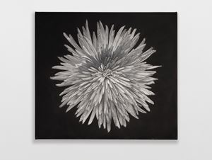 Chrysanthemum by Don Brown contemporary artwork