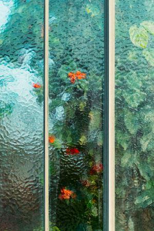 Clerodendrum splendens Lamiaceae by Samuel Zeller contemporary artwork