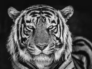The Cave by David Yarrow contemporary artwork