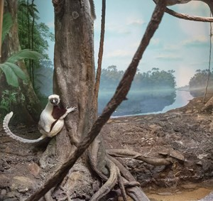 Lemur and river by Eric Pillot contemporary artwork