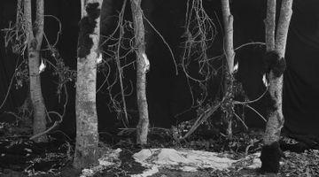 Contemporary art exhibition, Hannah Collins, Hannah Collins: El Tiempo del Fuego at Maureen Paley, STUDIO M, United Kingdom