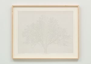 Numbers and Trees: Drawing 13 by Charles Gaines contemporary artwork