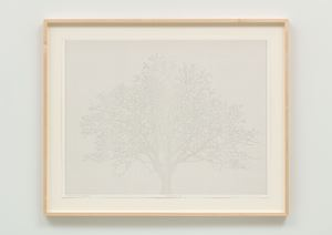 Numbers and Trees: Drawing 13 by Charles Gaines contemporary artwork works on paper