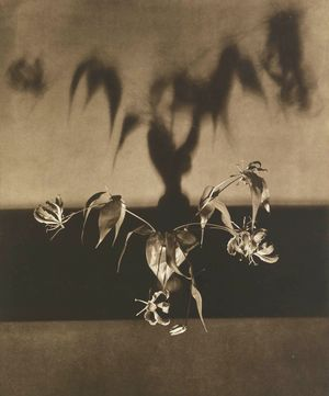 UNTITLED (FLOWERS) FROM THE PORTFOLIO 'FLOWERS' by Robert Mapplethorpe contemporary artwork