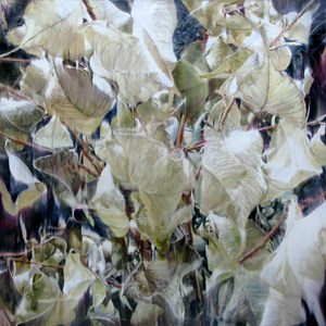 Dry Plant-18023 by Yoon Suk One contemporary artwork