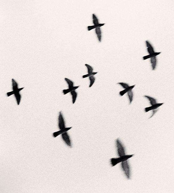 Nine Birds by Michael Kenna contemporary artwork