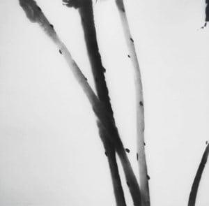 Tonic (Lotus) by Zhou Tiehai contemporary artwork