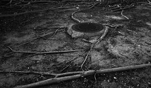 Roots by Anastasia Samoylova contemporary artwork
