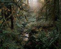 Sunshine Coast, British Columbia by Bruno Augsburger contemporary artwork photography