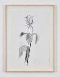 Rose 47 by Sabine Moritz contemporary artwork works on paper