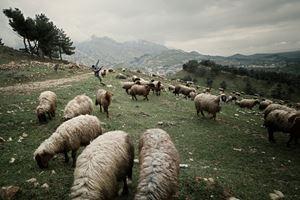 Shepherds and the Slaughterhouse 09, Akre, Kurdistan Region, Iraq by Simon Chang contemporary artwork