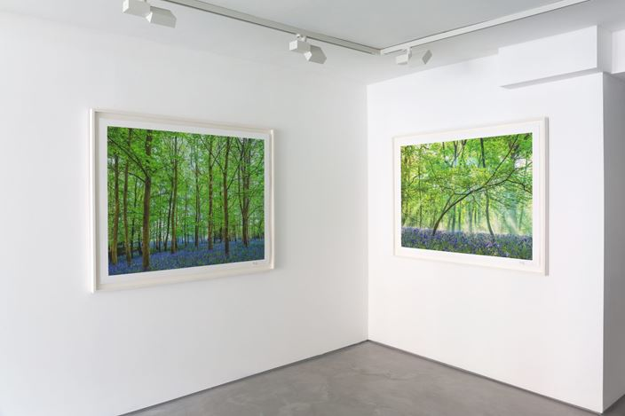Exhibition view: Adrian Houston, The Spirit of Nature, Informality, Henley on Thames (9 July–5 August 2020). Courtesy Informality.