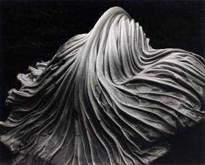 Cabbage Leaf by Edward Weston contemporary artwork