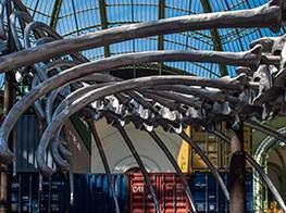 Jurassic art: Huang Yong Ping's 'Empires' fills the nave of Paris' Grand Palais