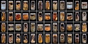 Arthropoda, Auckland Museum Tāmaki Paenga Hira #1 by Neil Pardington contemporary artwork