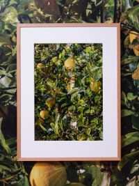 A Ruse (v) detail 1 by Shaun Waugh contemporary artwork print