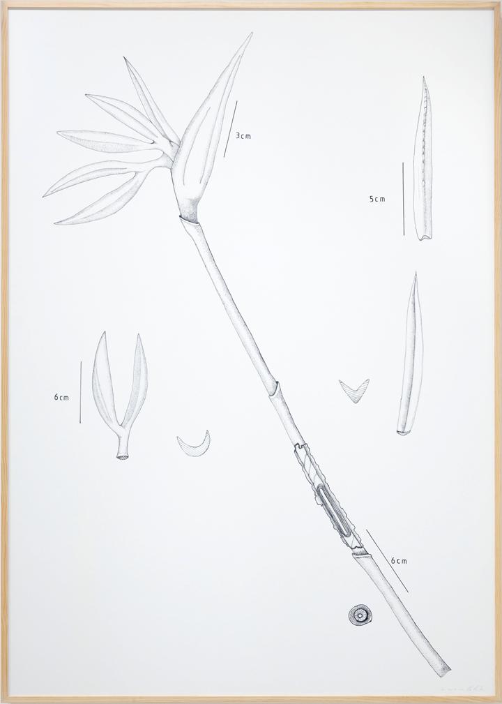 left: Chris Chong Chan Fui, BOTANIC : PLT#17 STRELITZIA (BIRD OF PARADISE) (2013). Digital print on paper. 213 × 152 cm. Courtesy the artist and Chan + Hori Contemporary, Singapore.