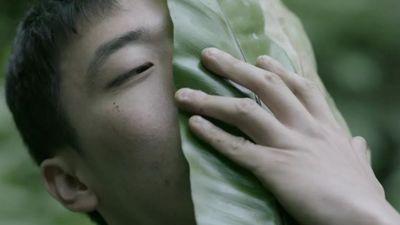 郑波,《蕨恋2》,2018。单频道录像、4K彩色、有声,20分。静帧截屏。图片提供:艺术家与台北市立美术馆。