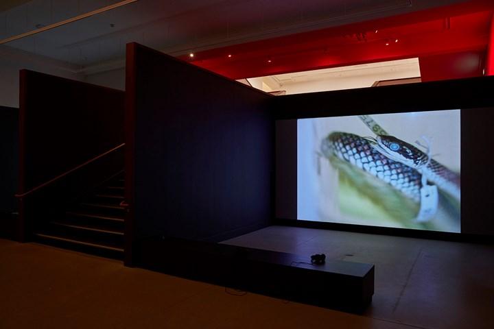 Sriwhana Spong, having-seen-snake (2016). 16mm transferred to HD video. 13 min 45 sec. Exhibition view: a hook but no fish, Govett-Brewster Art Gallery, New Plymouth (12 May–22 July 2018). Courtesy the artist and Michael Lett, Auckland; Govett-Brewster Art Gallery, New Plymouth. Photo: Samuel Hartnett.