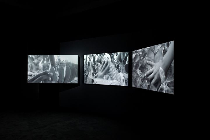 Thao Nguyen Phan, Mute Grain (2019). Exhibition view: Monsoon Melody, WIELS, Brussels (1 February–26 April 2020). Courtesy WIELS.
