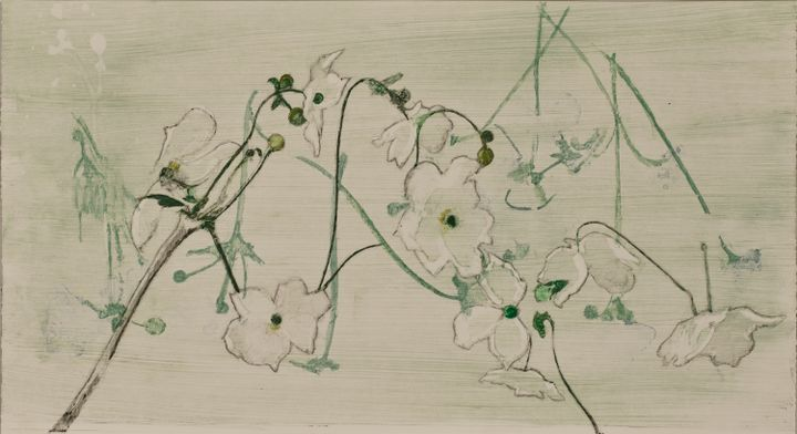 A series of white flowers dance across a faintly green-hued paper background.