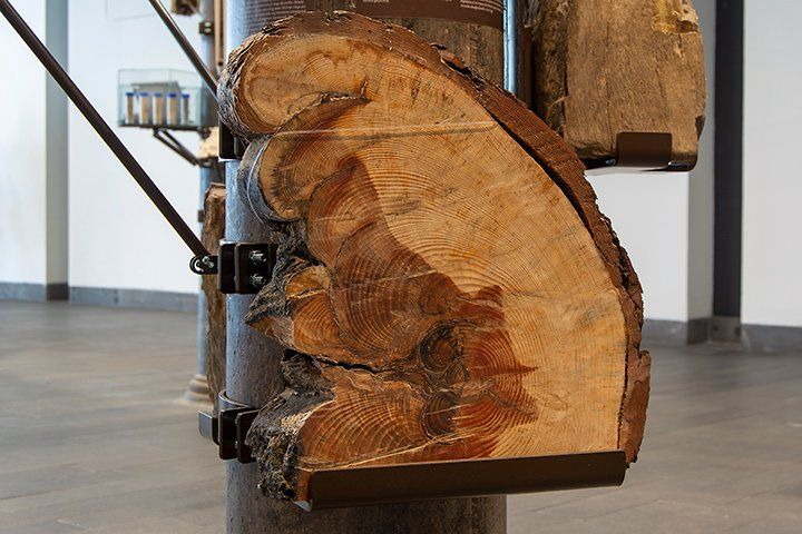 A cut section of a tree trunk is placed on a pole in the gallery space, forming part of the installation CLIMAVORE by Cooking Sections.