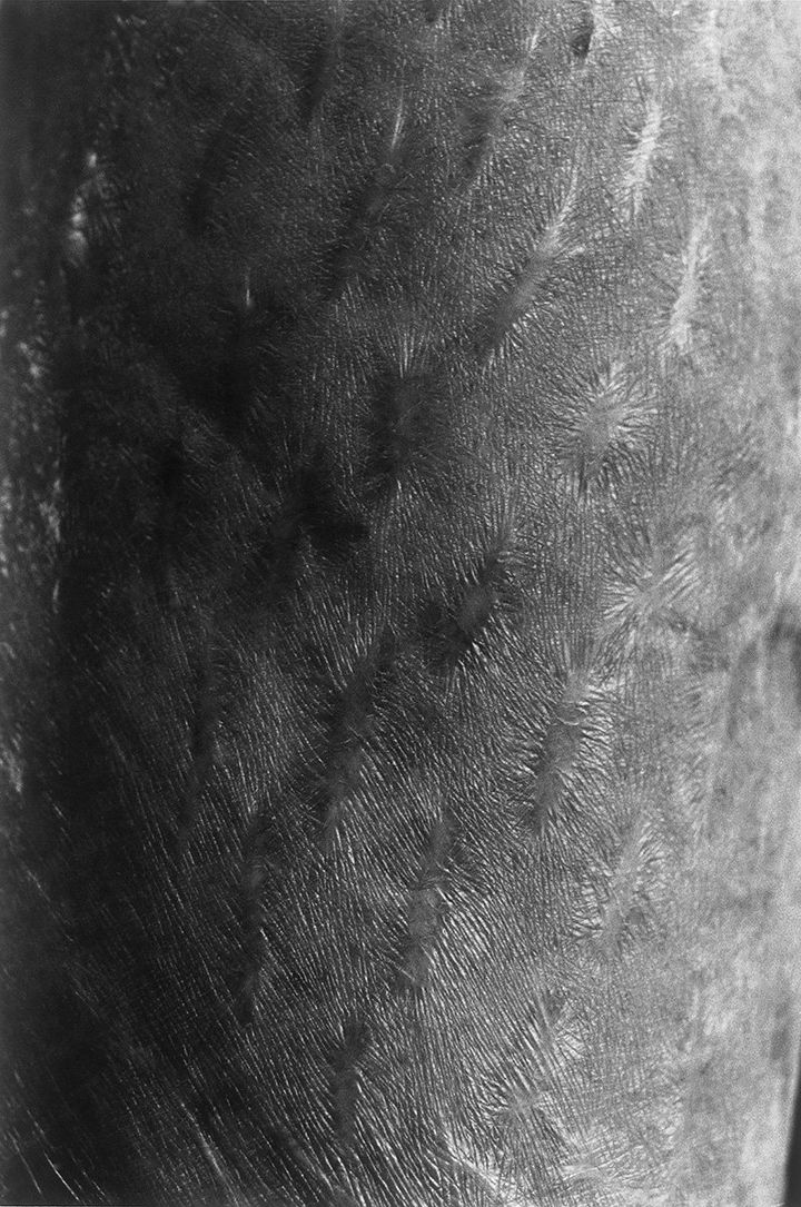 The surface of aged, delicate skin is photographed up close in black and white by Miyako Ishiuchi.