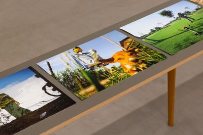Colourful images are placed along a long narrow table. One image captures a dog photographed from below, blades of grass visible above the lens.