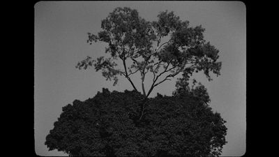 A photograph by Prantik Basu captures a tree within a frame. It is black against a grey background.
